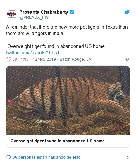 Publicación de Twitter por @PREAUX_FISH: A reminder that there are now more pet tigers in Texas than there are wild tigers in India.  Overweight tiger found in abandoned US home