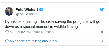 Twitter post by @PeteWishart: Dynasties amazing. The crew saving the penguins will go down as a special moment in wildlife filming.