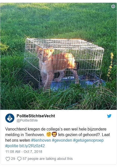 Twitter post by @PolitieStiVe: Vanochtend kregen de collega's een wel hele bijzondere melding in Tienhoven. 🤨🦁 Iets gezien of gehoord?. Laat het ons weten #tienhoven #gevonden #getuigenoproep #politie