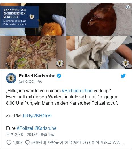 """Twitter post by @Polizei_KA: """"Hilfe, ich werde von einem #Eichhörnchen verfolgt!"""" Eventuell mit diesen Worten richtete sich am Do, gegen 8 00 Uhr früh, ein Mann an den Karlsruher Polizeinotruf.Zur PM  Eure #Polizei #Karlsruhe"""