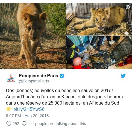 Twitter post by @PompiersParis: Des (bonnes) nouvelles du bébé lion sauvé en 2017 ! Aujourd'hui âgé d'un  an, « King » coule des jours heureux dans une réserve de 25 000 hectares  en Afrique du Sud👉