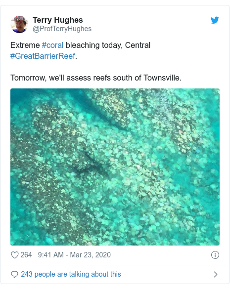 Twitter post by @ProfTerryHughes: Extreme #coral bleaching today, Central #GreatBarrierReef. Tomorrow, we'll assess reefs south of Townsville.