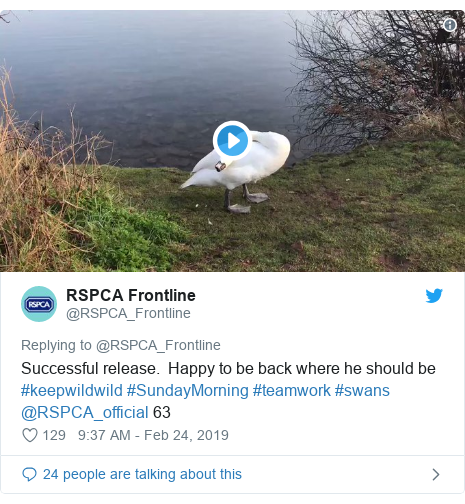 Twitter post by @RSPCA_Frontline: Successful release.  Happy to be back where he should be #keepwildwild #SundayMorning #teamwork #swans @RSPCA_official 63