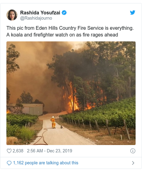 Twitter post by @Rashidajourno: This pic from Eden Hills Country Fire Service is everything. A koala and firefighter watch on as fire rages ahead