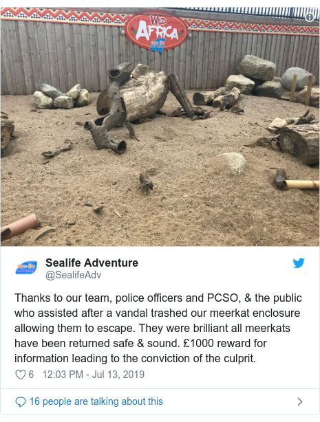 Twitter post by @SealifeAdv: Thanks to our team, police officers and PCSO, & the public who assisted after a vandal trashed our meerkat enclosure allowing them to escape. They were brilliant all meerkats have been returned safe & sound. £1000 reward for information leading to the conviction of the culprit.