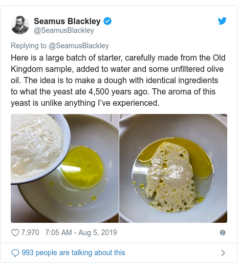 Twitter post by @SeamusBlackley: Here is a large batch of starter, carefully made from the Old Kingdom sample, added to water and some unfiltered olive oil. The idea is to make a dough with identical ingredients to what the yeast ate 4,500 years ago. The aroma of this yeast is unlike anything I've experienced.