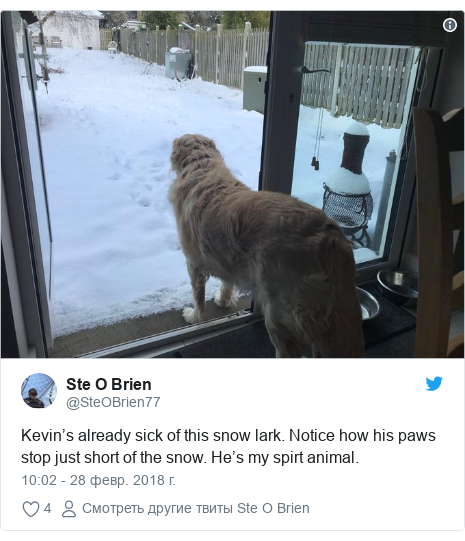 Twitter post by @SteOBrien77: Kevin's already sick of this snow lark. Notice how his paws stop just short of the snow. He's my spirt animal.