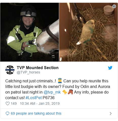Twitter post by @TVP_horses: Catching not just criminals..! 👮♀️ Can you help reunite this little lost budgie with its owner? Found by Odin and Aurora on patrol last night in @tvp_mk 🐤🐴 Any info, please do contact us! #LostPet P6736