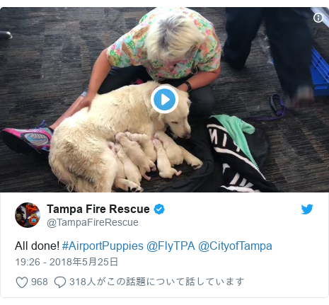 Twitter post by @TampaFireRescue: All done! #AirportPuppies @FlyTPA @CityofTampa