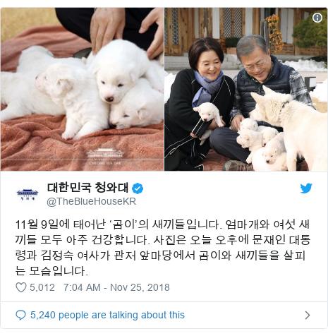 Twitter post by @TheBlueHouseKR: 11월 9일에 태어난 '곰이'의 새끼들입니다. 엄마개와 여섯 새끼들 모두 아주 건강합니다. 사진은 오늘 오후에 문재인 대통령과 김정숙 여사가 관저 앞마당에서 곰이와 새끼들을 살피는 모습입니다.
