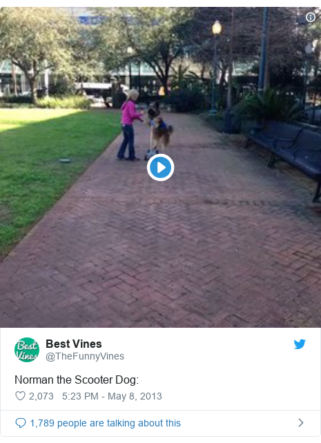 Twitter post by @TheFunnyVines: Norman the Scooter Dog