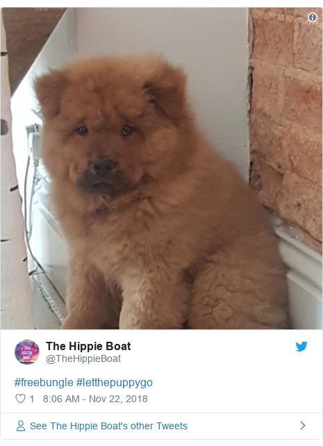 Twitter post by @TheHippieBoat: #freebungle #letthepuppygo