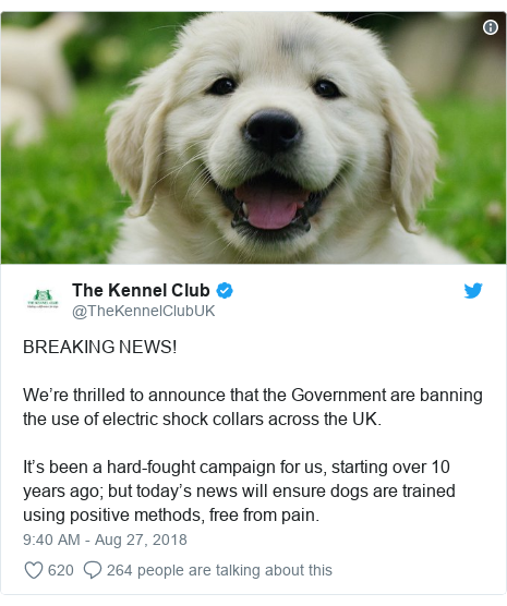 Twitter post by @TheKennelClubUK: BREAKING NEWS!We're thrilled to announce that the Government are banning the use of electric shock collars across the UK.It's been a hard-fought campaign for us, starting over 10 years ago; but today's news will ensure dogs are trained using positive methods, free from pain.