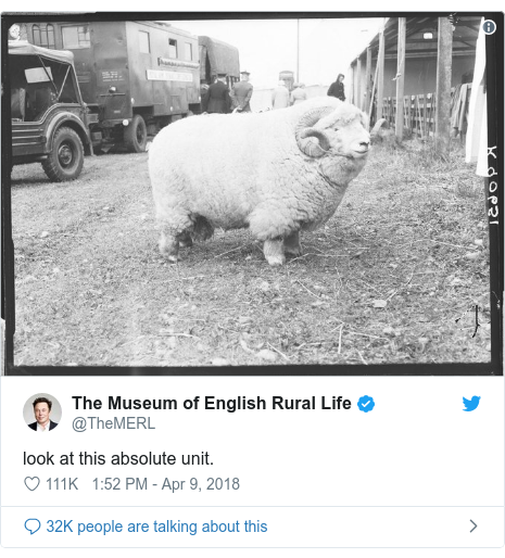 Twitter post by @TheMERL: look at this absolute unit.