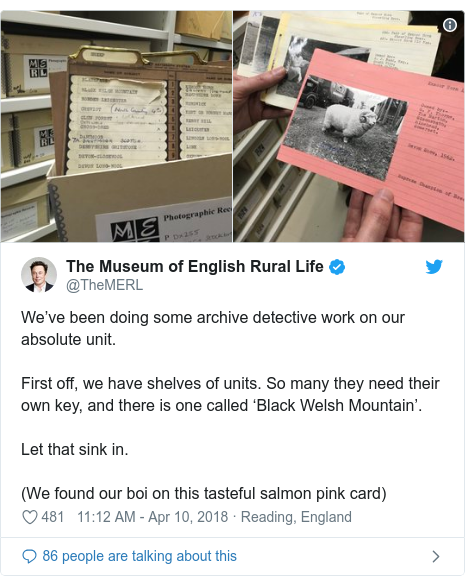 Twitter post by @TheMERL: We've been doing some archive detective work on our absolute unit.First off, we have shelves of units. So many they need their own key, and there is one called 'Black Welsh Mountain'.Let that sink in.(We found our boi on this tasteful salmon pink card)