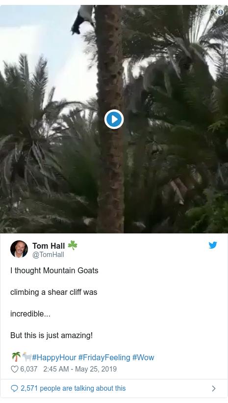 Ujumbe wa Twitter wa @TomHall: I thought Mountain Goatsclimbing a shear cliff wasincredible...But this is just amazing!🌴🐐#HappyHour #FridayFeeling #Wow