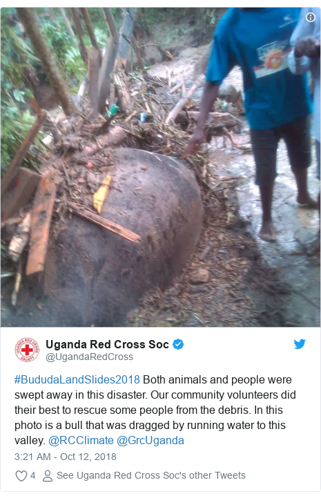 Twitter ubutumwa bwa @UgandaRedCross: #BududaLandSlides2018 Both animals and people were swept away in this disaster. Our community volunteers did their best to rescue some people from the debris. In this photo is a bull that was dragged by running water to this valley. @RCClimate @GrcUganda