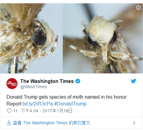 Twitter 用户名 @WashTimes: Donald Trump gets species of moth named in his honor  Report  #DonaldTrump
