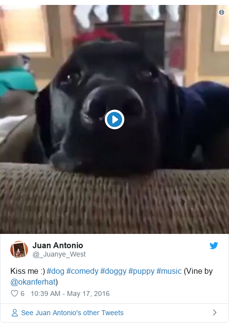 Twitter post by @_Juanye_West: Kiss me  ) #dog #comedy #doggy #puppy #music (Vine by @okanferhat)