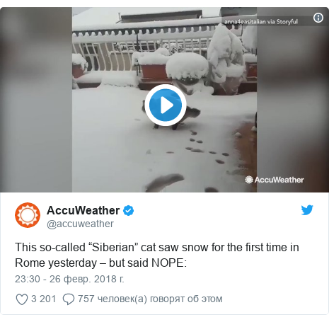 "Twitter post by @accuweather: This so-called ""Siberian"" cat saw snow for the first time in Rome yesterday – but said NOPE"