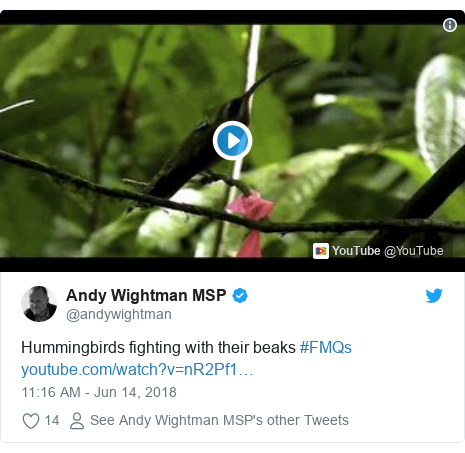 Twitter post by @andywightman: Hummingbirds fighting with their beaks #FMQs