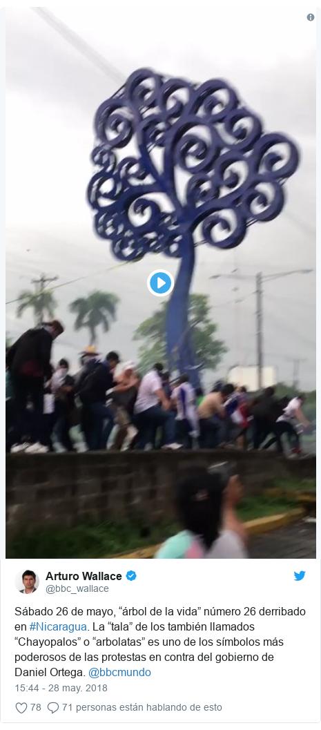 """Publicación de Twitter por @bbc_wallace: Sábado 26 de mayo, """"árbol de la vida"""" número 26 derribado en #Nicaragua. La """"tala"""" de los también llamados """"Chayopalos"""" o """"arbolatas"""" es uno de los símbolos más poderosos de las protestas en contra del gobierno de Daniel Ortega. @bbcmundo"""