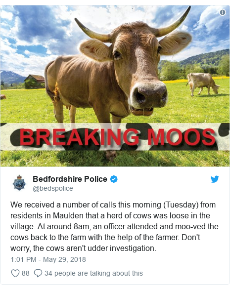 Twitter post by @bedspolice: We received a number of calls this morning (Tuesday) from residents in Maulden that a herd of cows was loose in the village. At around 8am, an officer attended and moo-ved the cows back to the farm with the help of the farmer. Don't worry, the cows aren't udder investigation.