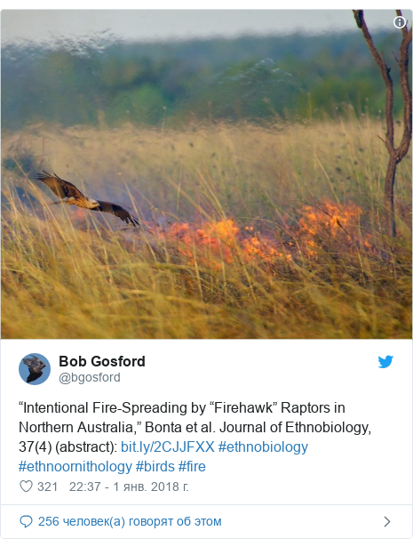 "Twitter пост, автор: @bgosford: ""Intentional Fire-Spreading by ""Firehawk"" Raptors in Northern Australia,"" Bonta et al. Journal of Ethnobiology, 37(4) (abstract)   #ethnobiology #ethnoornithology #birds #fire"