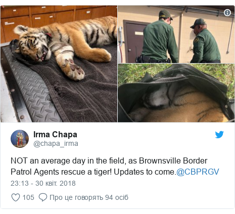 Twitter допис, автор: @chapa_irma: NOT an average day in the field, as Brownsville Border Patrol Agents rescue a tiger! Updates to come.@CBPRGV