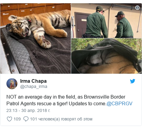 Twitter post by @chapa_irma: NOT an average day in the field, as Brownsville Border Patrol Agents rescue a tiger! Updates to come.@CBPRGV