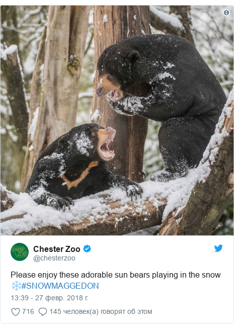 Twitter post by @chesterzoo: Please enjoy these adorable sun bears playing in the snow ❄️#SNOWMAGGEDON