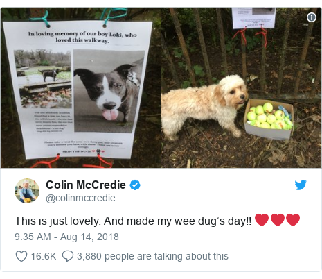 Twitter post by @colinmccredie: This is just lovely. And made my wee dug's day!! ❤️❤️❤️