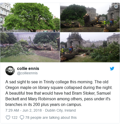 Twitter post by @collieennis: A sad sight to see in Trinity college this morning. The old Oregon maple on library square collapsed during the night. A beautiful tree that would have had Bram Stoker, Samuel Beckett and Mary Robinson among others, pass under it's branches in its 200 plus years on campus.