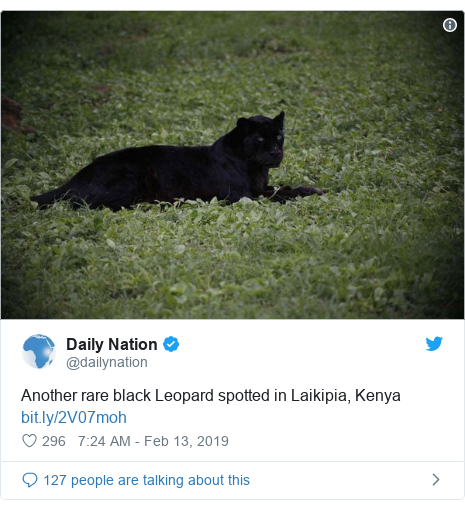 Ujumbe wa Twitter wa @dailynation: Another rare black Leopard spotted in Laikipia, Kenya