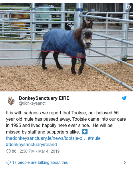 Twitter post by @donkeysanct: It is with sadness we report that Tootsie, our beloved 56 year old mule has passed away. Tootsie came into our care in 1995 and lived happily here ever since.  He will be missed by staff and supporters alike. ➡️ #mule #donkeysanctuaryireland