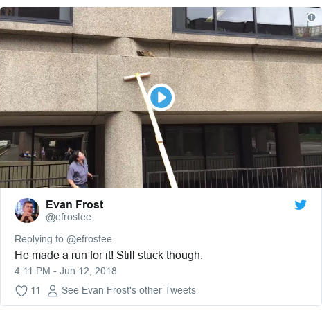Twitter post by @efrostee: He made a run for it! Still stuck though.