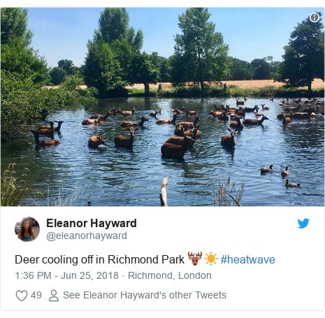 Twitter post by @eleanorhayward: Deer cooling off in Richmond Park 🦌☀️ #heatwave