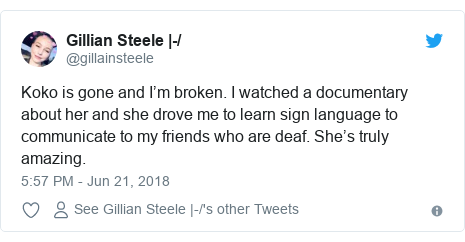 Twitter post by @gillainsteele: Koko is gone and I'm broken. I watched a documentary about her and she drove me to learn sign language to communicate to my friends who are deaf. She's truly amazing.