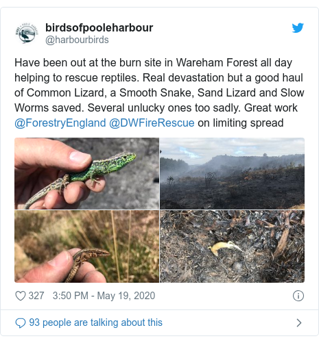 Twitter post by @harbourbirds: Have been out at the burn site in Wareham Forest all day helping to rescue reptiles. Real devastation but a good haul of Common Lizard, a Smooth Snake, Sand Lizard and Slow Worms saved. Several unlucky ones too sadly. Great work @ForestryEngland @DWFireRescue on limiting spread