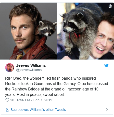 Twitter post by @jeeveswilliams: RIP Oreo, the wonderfilled trash panda who inspired Rocket's look in Guardians of the Galaxy. Oreo has crossed the Rainbow Bridge at the grand ol' raccoon age of 10 years. Rest in peace, sweet rabbit.