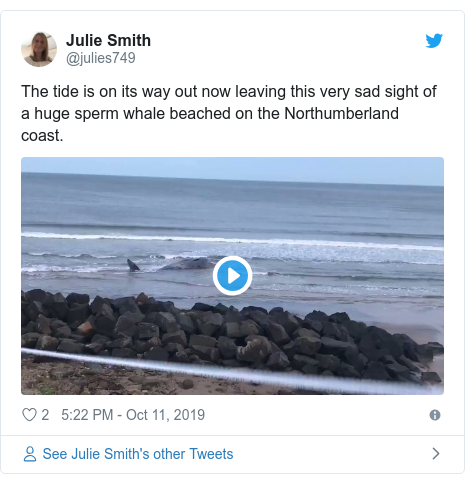 Twitter post by @julies749: The tide is on its way out now leaving this very sad sight of a huge sperm whale beached on the Northumberland coast.