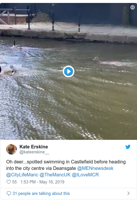 Twitter post by @kateerskine__: Oh deer...spotted swimming in Castlefield before heading into the city centre via Deansgate @MENnewsdesk @CityLifeManc @TheMancUK @ILoveMCR