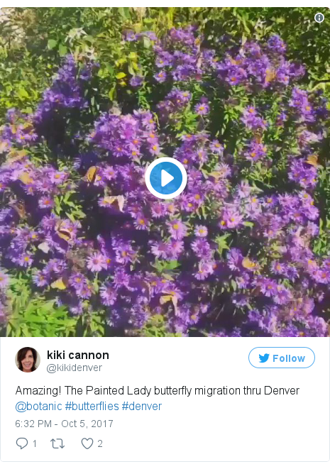 Twitter post by @kikidenver: Amazing! The Painted Lady butterfly migration thru Denver  @botanic #butterflies #denver pic.twitter.com/MqQ2BE0sEI