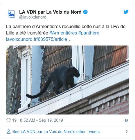 Twitter post by @lavoixdunord: La panthère d'Armentières recueillie cette nuit à la LPA de Lille a été transférée #Armentières #panthère