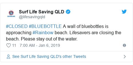 Twitter post by @lifesavingqld: #CLOSED #BLUEBOTTLE A wall of bluebottles is approaching #Rainbow beach. Lifesavers are closing the beach. Please stay out of the water.