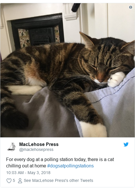 Twitter post by @maclehosepress: For every dog at a polling station today, there is a cat chilling out at home #dogsatpollingstations