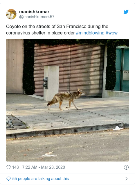 Twitter post by @manishkumar457: Coyote on the streets of San Francisco during the coronavirus shelter in place order #mindblowing #wow
