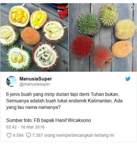 Twitter pesan oleh @manusiasuper: 6 jenis buah yang mirip durian tapi demi Tuhan bukan. Semuanya adalah buah lokal endemik Kalimantan. Ada yang tau nama-namanya?Sumber foto  FB bapak Hanif Wicaksono