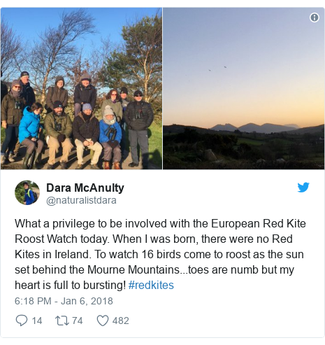 Twitter post by @naturalistdara: What a privilege to be involved with the European Red Kite Roost Watch today. When I was born, there were no Red Kites in Ireland. To watch 16 birds come to roost as the sun set behind the Mourne Mountains...toes are numb but my heart is full to bursting! #redkites