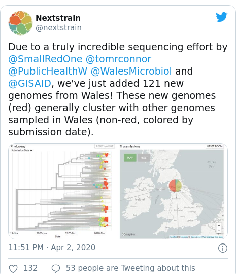 Twitter post by @nextstrain: Due to a truly incredible sequencing effort by @SmallRedOne @tomrconnor @PublicHealthW @WalesMicrobiol and @GISAID, we've just added 121 new genomes from Wales! These new genomes (red) generally cluster with other genomes sampled in Wales (non-red, colored by submission date).